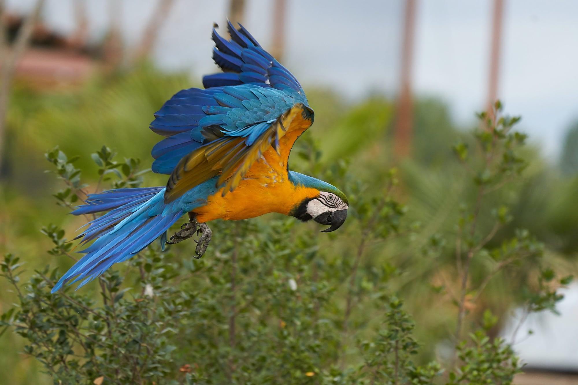 Parrot World attire 33000 visiteurs le premier mois